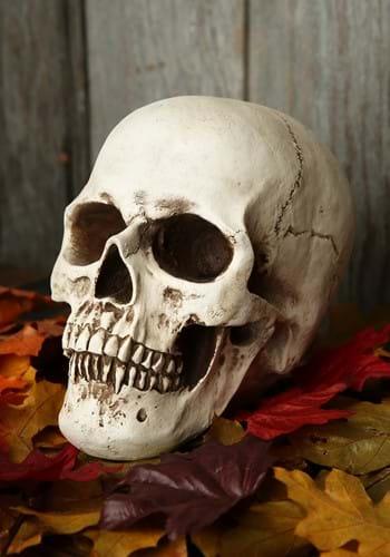 Cráneo realista de lujo