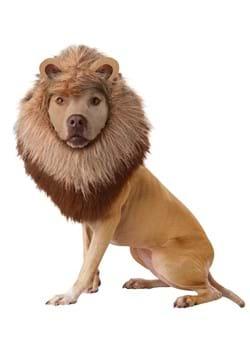 Disfraz de león para mascota