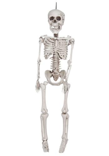 Esqueleto realista de plástico de 12 pulgadas