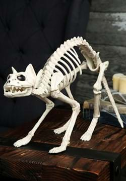 Gato esqueleto