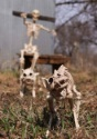Skeleton Cat todos 2