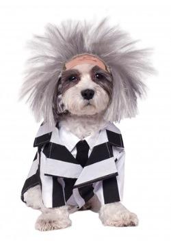 Disfraz de Beetlejuice para mascota