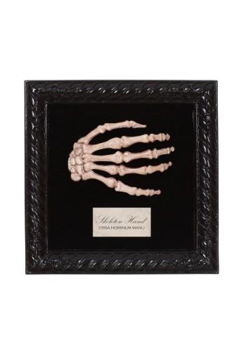 Mano de esqueleto de muestra de laboratorio