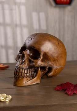 Cráneo de resina de utilería