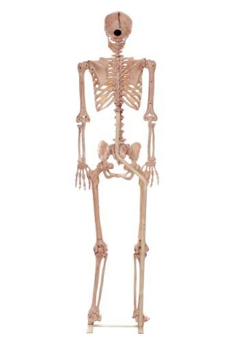 Esqueletos con soporte de tamaño natural