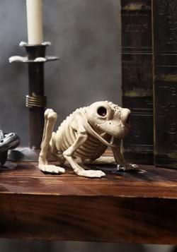 Rana esqueleto
