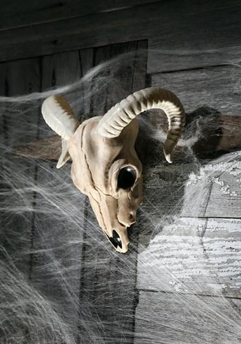 Cráneo de carnero